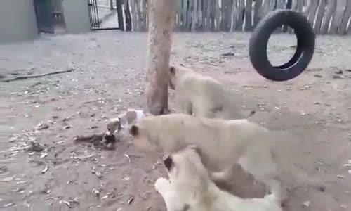 Canavarlar Bir Anda Görülebilir ))