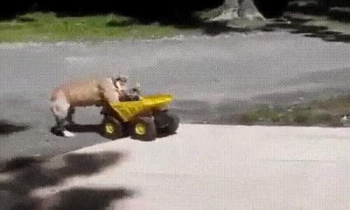 Köpeğin Oyuncakla İmtihanı