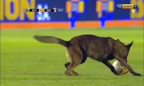 Sahaya Giren Polis Köpeği Topu Alıp Böyle Kaçtı
