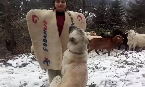 Çoban Kızın Andı