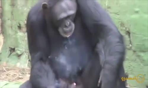 Komik Hayvan Videoları