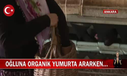 Din Kültürü Öğretmeni Özlem Arslan 1500 Tavuk Alarak Kümes Kurdu! İşte Görüntüler