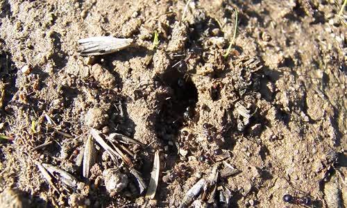 Karıncaların Yuvası