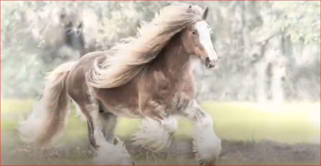 Var Olduğuna İnanamayacağınız 5 At Türü