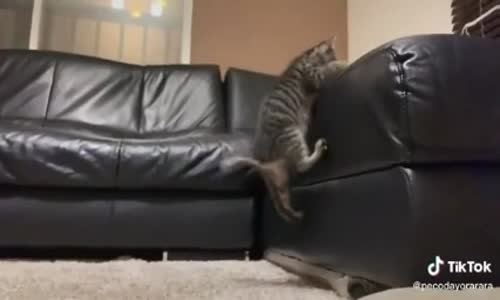 Sırt Üstü Düşen İlk Kedi
