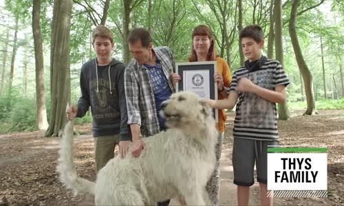 Dünyanın En Uzun Kuyruğuna Sahip Köpeği Keon ile Tanışın!