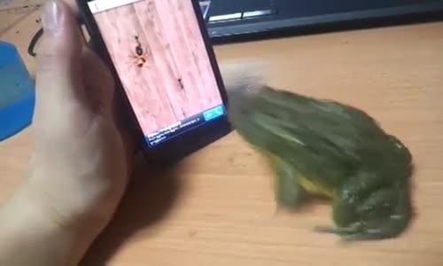 Kurbağanın Diliyle Samsung Telefon ile İmtihanı
