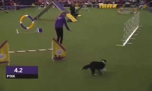Köpeğin eğitimle sınavı