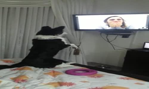 9 Aydır Göremediği Sahibini Televizyonda Görünce Sevinçten Ne Yapacağını Şaşıran Köpek