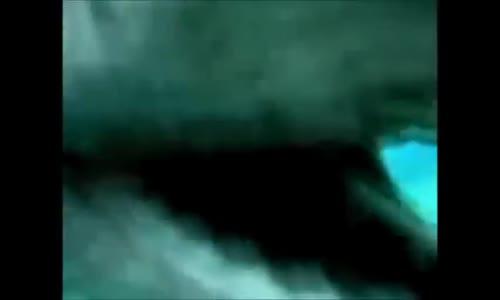 Fırfırlı Köpekbalığı