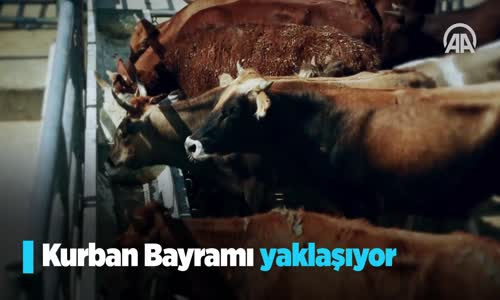 Türkiye'nin Kurban Bağışları Milyonlara Ulaşacak