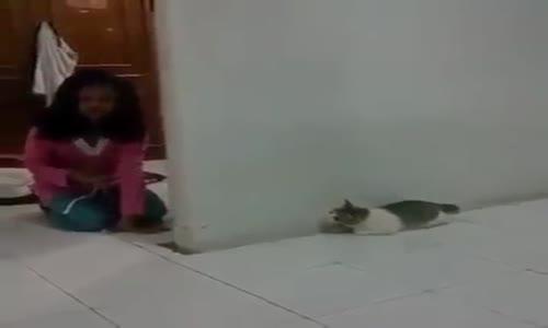 Kedinin Aklını Alan Çocuk