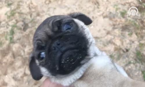 Yavru Köpekler Bagajda Bulundu