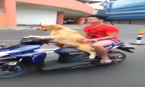 Hayvanları yanlış yönlendirmemiz. Köpek Motosiklet Sürmesi