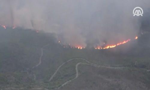 Yunanistan'daki Orman Yangınlarında 74 Kişi Öldü