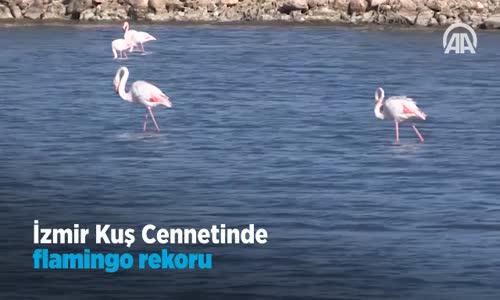 İzmir Kuş Cenneti'nde Flamingo Rekoru  Kırıldı