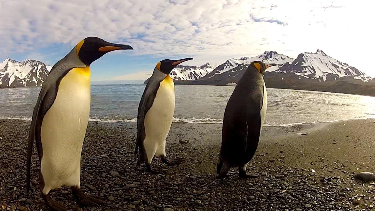 Penguen Dansı -The Penguin Dance