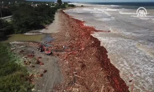Selin Denize Sürüklediği Fındık Ağaçları Havadan Görüntülendi