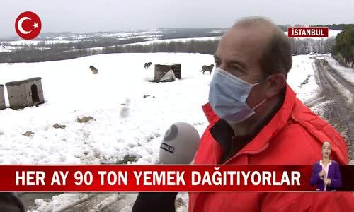 İstanbul Orman Gönüllüleri Her Ay Sokaktaki Canlara 90 Ton Yemek Dağıtıyor! İşte Görüntüler