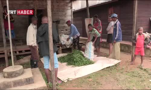 Vanilya İçin Tehlike Çanları Çalıyor