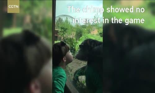 Şempanze ile Küçük Çocuğun Öpüşmesi