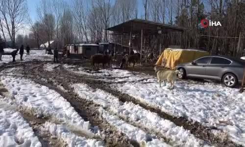 Tuzla'da ahırın çatısı çöktü, 60'a yakın hayvan kurtarıldı