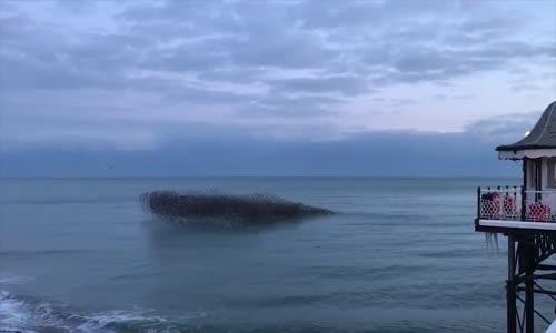 Sığırcıkların Deniz Üstündeki Büyüleyen Dansı