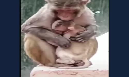 Anne Olmak Hayvanlarda da Aynı