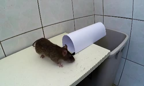 Kağıttan Tuzak Kurup Fare Yakalamak