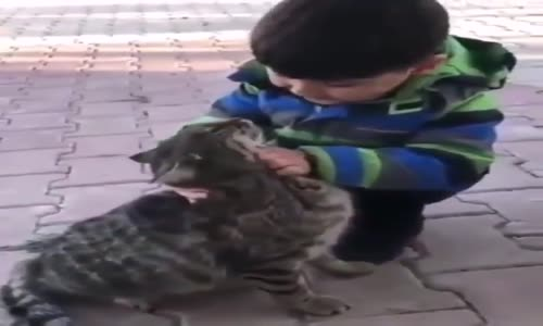 Büyüyünce Kedi Olmak İsteyen Ufaklık