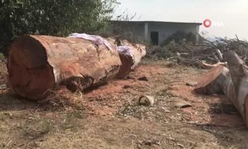 Ceyhan'da ağaç kesme kavgası- 2 ölü, 4 yaralı