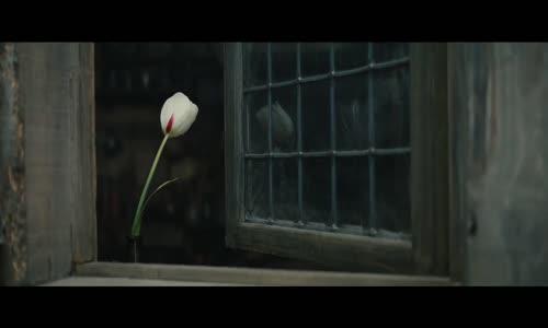 Tulip Fever Fragman